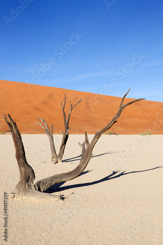 Two trees at the sossusvlei.