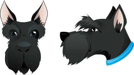Scottish terrier dog head