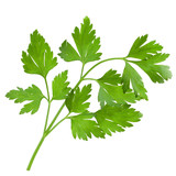 Fototapety Bunch of parsley isolated on white