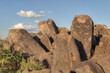 Petroglyphs at Saguaro National Park