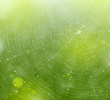 Web of natural background - 41509105