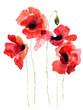 Fototapeten,floral,blume,mohn,rot