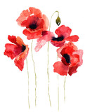 Stylized Poppy flowers illustration - 41511336