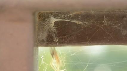 ragno e moscerino