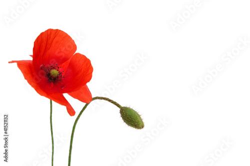 Papiers peints Poppy poppy flower