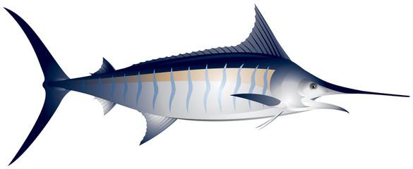 Marlin, fish vector illustration