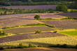 Alba sui campi coltivati a Sault Provenza