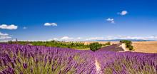 Les champs de lavande en Provence Valensole