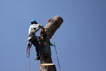Worker Topping off top of tree