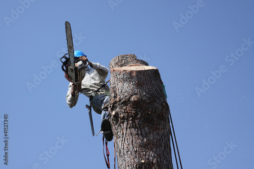 Tree trimmer dangerous jobs