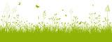 Fototapety Blumenwiese, Gras, Wiese, Grün, Feldwiese, Sommer, Frühling