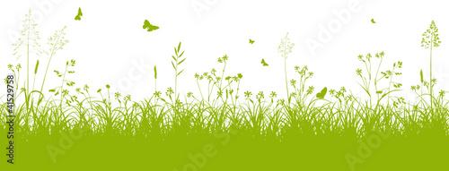 Blumenwiese, Gras, Wiese, Grün, Feldwiese, Sommer, Frühling - 41529758