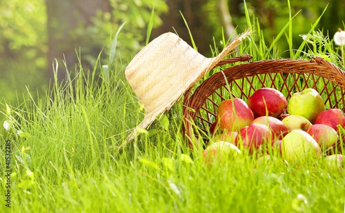apple in garden