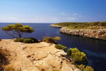 Ocean view pine tree