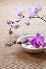 zen flowers in water