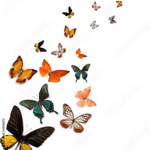 Fotobehang Vlinder Butterfly specimens