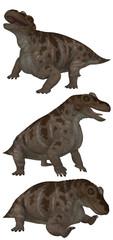 Keratocephalus