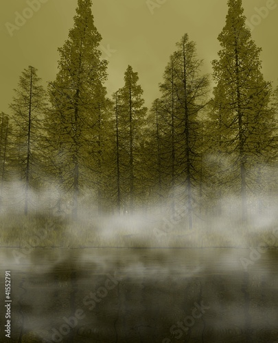 Fototapeten,nebel,tanne,baum,teich