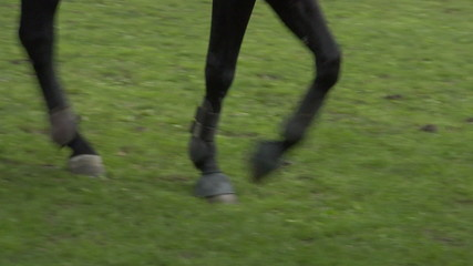 horse race jump close up 01