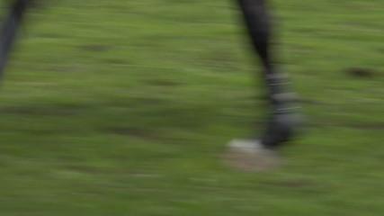 horse race jump close up 03
