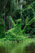 Regenwald Rio Demeni