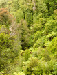 Bird view of lush green sub-tropical NZ rainforest