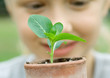 Child looking at seedling planted in pot