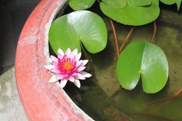 Лилия в вазе и рыбки.
