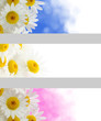 Spring flowers banners
