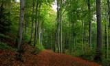 Fototapety Wald