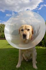 Dopo la visita del veterinario...