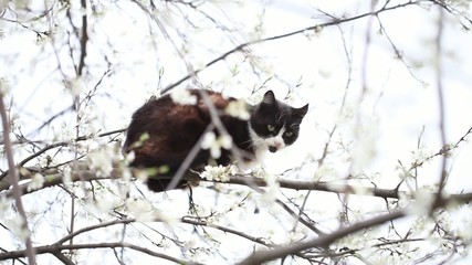 A cat on a tree