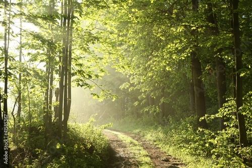AluDibond Wald Forest path on a sunny May morning