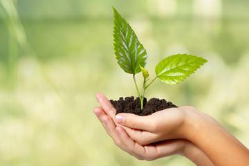 tree green fresh in female hand