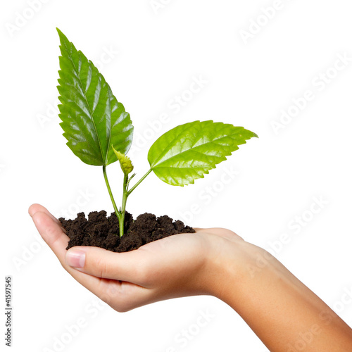 tree green fresh in female hand isolated
