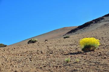 Rincón del Teide