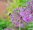 Пчела на весеннем цветке.