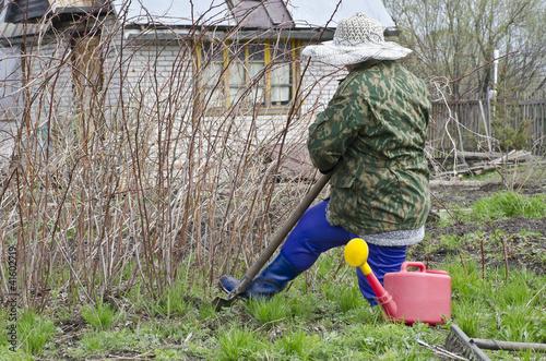 Женщина выкапывает малину.