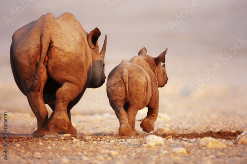 Tuinposter Koe Black Rhinoceros baby and cow