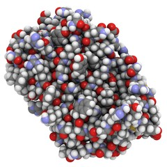interferon beta molecule