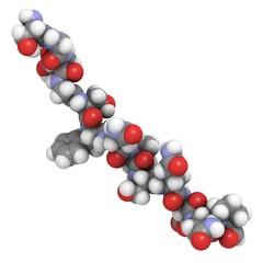 deamidated gluten peptide allergen.