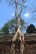 Árbol creciendo sobre una de las galerías del templo de Ta Prohm