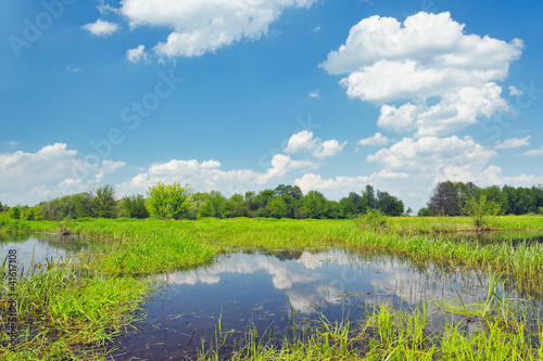 Meadow with the swamp near Narew river, Poland