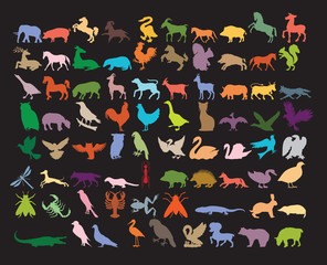 Big variety of animals.