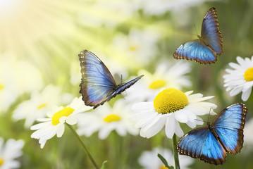 prato fiorito con farfalle blu
