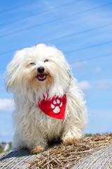 Hund auf dem Strohballen