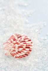 Sea shell and salt