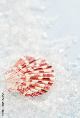 Sea shell and salt