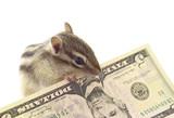 Chipmunk grasping 5 dollars poster