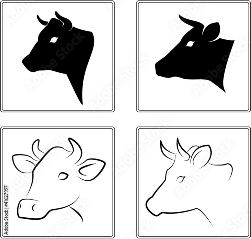 The heads of a cow on a white background